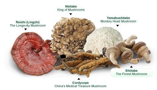 medicinal mushroom blend