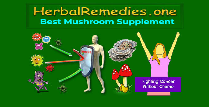 Best Mushroom Supplement