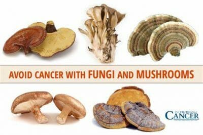 Mushrooms for Cancer