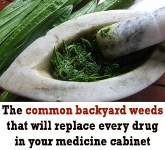 what are medicinal herbs