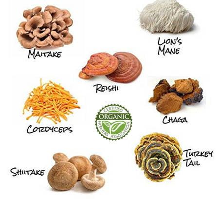 organic mushroom extract