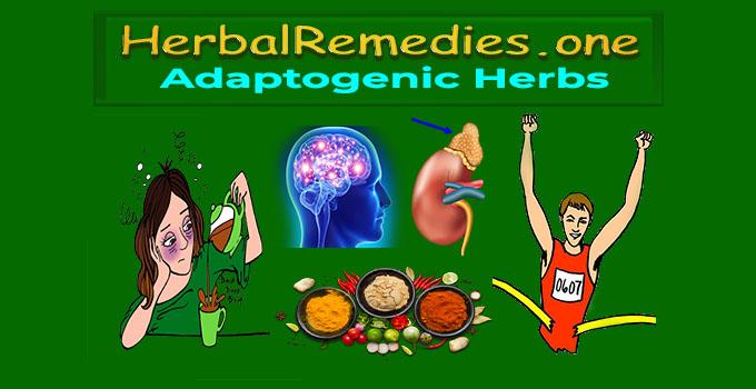 herbs for energy