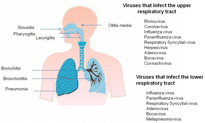 covid-19 and respiratory infections
