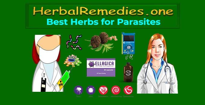 best herbs for parasites